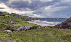 Ceannabeinne (Fil.ippo) Tags: ceannabeinne beach spiaggia durness scotland scozia scotch landscape seascape water sea acqua sky clouds sheep pecora paesaggio panorama sand filippo filippobianchi fuji travel xt2