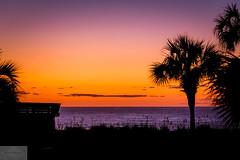 Beach Sunrise (Wycpl) Tags: myrtlebeach sunrise palmtrees beachhouse jcpphotography redskies