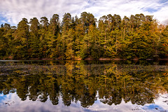 Autumn reflection (cygossphotography) Tags: stuttgart badenwürttemberg deutschland germany allemagne landschaft landscape paysage natur nature herst autumn fall automne wald forest forêt spiegelung reflection reflet see lake lac goldenestunde goldenhour heuredoréee canon eos 6d