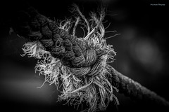 Rope (Neil Adams Photography (Wirral)) Tags: bw lowlight lowkey blackwhite