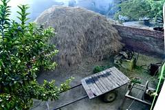 The proverbial haystack (noitalsnarT_nI_tsoL) Tags: rural village haystack brick wheel wall cart tyre straw feed tree guava