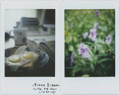 this morning (breeze.kaze) Tags: instantfilm fujiinstaxminifilm mintinstantflextl70 f8 closeuplens morning breakfast egg bread mexicanpetunia flowers