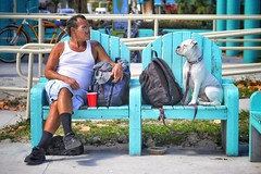 man vs dog in a staring contest (Bluescruiser1949) Tags: dog man miami miamibeach colourful nikond300 streetphotography walkaboutphotography photojournalism parkbench stare southbeach staring bench