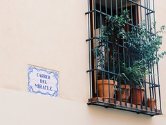 a miraclous road (Hank Chuang Chuang) Tags: street streetphoto roadname valencia spain canon canon77d sigma18200mm vsco colour photography camera practice sunday miracle school flower pot plant window afternoon