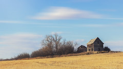 together 'til the end (rockinmonique) Tags: alberta field old sky weathered yellow blue landscape tree barn moniquewphotography canon canont6s copyright2019moniquewphotography