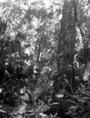 Camera Test: 1938 Voigtländer Bessa, Type E + 1995 Agfa APX 100 + Rodinal 1:25 (DaseinDesign) Tags: voigtländerbessatypee 120film agfaapx100 filmphotography florida blackandwhite