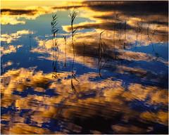 Lake Reeds - Suomi (niggyl (getting there)) Tags: suomi finland centralfinland jyväskylä myhinpääntie lakevhvanen nikcollection colorefexpro4 colorefexpro lumenzia breathtakinglandscapes landscape lake reeds sundown clouds reflection abstract water ripples fujifilm fujifilmxt1 fujixt1 xt1 fujinon fujinonxf1855284rlmois fujixf1855r xf1855284 xf1855