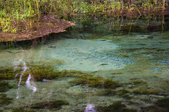 (cox2021) Tags: springs outdoors nature clear water stateparks rainbowsprings florida
