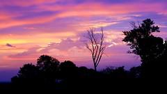 October Sunrise (imageClear) Tags: deadwood trees sunrise october monring earlymorning sheboygan wisconsin color dawn aperture nikon d500 80400mm imageclear flickr photostream nature landscape