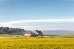 Bauernhof bei Bad Wurzach bei Morgenstimmung (PADDYSCHMITT.DE) Tags: allgäu unterschwarzach bauernhof landhaus weide kühe morgennebel