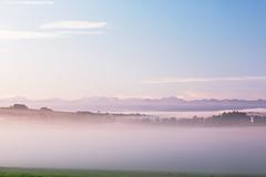 Morgennebel über dem Wurzacher Ried (PADDYSCHMITT.DE) Tags: badenwürttemberg badwurzach wurzacherried ried moor morgennebel alpensicht alpenpanorama kirchturm maisfeld berge alpen allgäu