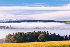 Bad Wurzach im Morgennebel (PADDYSCHMITT.DE) Tags: badenwürttemberg badwurzach wurzacherried ried moor morgennebel alpensicht alpenpanorama kirchturm maisfeld berge alpen