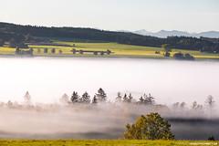 Morgennebel mit Alpensicht bei Bad Wurzach (PADDYSCHMITT.DE) Tags: badenwürttemberg badwurzach wurzacherried ried moor morgennebel alpensicht alpenpanorama