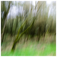ICM trees , Findatie (wwshack) Tags: icm intentionalcameramovement kinross lochleven lochlevenheritagetrail scotland treeabstracts trees