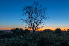 Dawn Silhouette (nicklucas2) Tags: landscape seasons autumn tree newforest mogshade silhouette dawn