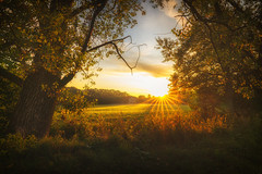 Autumn Rising (der_peste (on/off)) Tags: autumn fall sunstar sunrise morning warm warmlight light sun sunlight sunshine country countryside bavaria germany trees mood moody orange