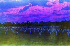Into this world where drawn (tomows) Tags: expiredfilm film analogue analog clouds olympusom10 nikor50mmf18 kodak kodakgold 35mm unicolorpowderc41kit epsonv550