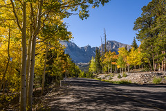 Wheeler Peak Scenic Drive (Jeff Sullivan (www.JeffSullivanPhotography.com)) Tags: greatbasinnationalparkbakereasternnevadausaamericansout fall colors great basin national park baker eastern nevada usa american southwest landscape nature travel photography nikon d850 nikkor 1735mm lens photo copyright jeff sullivan 2019 september