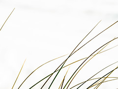 RightBent.jpg (Klaus Ressmann) Tags: klaus ressmann omd em1 abstract beach foleron grass nature design flcabsnat minimal wind klausressmann omdem1