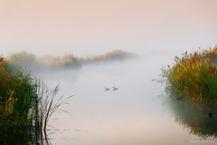 A Moment of Serenity (Johan Konz) Tags: mist groundmist fog water watercourse serenity reed landscape waterscape outdoors nopeople early morning sunrise purmerland waterland netherlands nikon d7500 bird duck creek reflection bestcapturesaoi elitegalleryaoi aoi