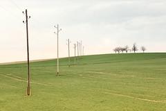 Choreography with Poles and Trees (Bernd Walz) Tags: fieldscape landscape fields poles trees rural countryside anthropogenics transformedlandscape artificiallandscape vastness minimalistic minimalism farmland fineart manufacturedlandscapes