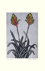 Lobster-claws (Japanese Flower and Bird Art) Tags: flower lobsterclaws vriesea carinata bromeliaceae suiho tagawa modern intaglio print japan japanese art readercollection