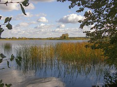 Juglas lake (galterrashulc) Tags: latvia riga juglas lake rīga latvija lettland landscape lakescape nature flora grass yellow water island tree sky clouds blue branches reflection olympus sp550uz irina galitskaya galterrashulc autumn gold