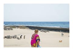 _K003720 (Jordane Prestrot) Tags: ♎ jordaneprestrot fuerteventura océan ocean océano atlantique atlantic atlantico plage beach playa touriste tourist turista chèvre goat cabra chien dog perro
