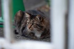猫 (Architecamera) Tags: animal cat color snap street d750
