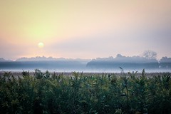 sunrise (Yuki (8-ballmabelleamie)) Tags: lakecountyforestpreserves sunrise morning hazy misty tone light pastelcolours colors tallgrassprairie field rustic rural countryside hiking outdoor cinematic dreamy landscape canoneos60d