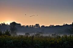 southbound (Bo Dudas) Tags: autumn fall sunrise sunset birds geese sun sky trees prairie for mist horizon nature