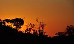 Último pôr do sol de Setembro (Ruby Augusto) Tags: pôrdosol sunset silhuetas silhouettes branches trees árvores campinassp