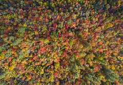 Falling (Matt Champlin) Tags: fall autumn foliage colorful amazing life nature outdoors forest camp camping hike hiking adventure peaceful drone drones aerial adirondacks adk adks wilderness