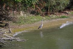 IMGP6779 (Alvier) Tags: rumänien donau donaudelta natur vögel fluss strom delta schiff schifffahrt donaufahrt