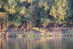 IMGP6808 (Alvier) Tags: rumänien donau donaudelta natur vögel fluss strom delta schiff schifffahrt donaufahrt