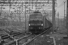 milano area settembre 2019 #7 (train_spotting) Tags: milanorogoredo lenord ferrovienordmilano nordcargo dbcargoitaliasrl vectrondc vectron e1910203inc siemens nikond7100