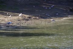 IMGP6777 (Alvier) Tags: rumänien donau donaudelta natur vögel fluss strom delta schiff schifffahrt donaufahrt