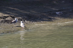 IMGP6778 (Alvier) Tags: rumänien donau donaudelta natur vögel fluss strom delta schiff schifffahrt donaufahrt