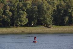 IMGP6804 (Alvier) Tags: rumänien donau donaudelta natur vögel fluss strom delta schiff schifffahrt donaufahrt