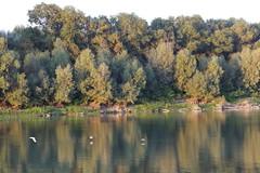 IMGP6810 (Alvier) Tags: rumänien donau donaudelta natur vögel fluss strom delta schiff schifffahrt donaufahrt