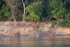 IMGP6812 (Alvier) Tags: rumänien donau donaudelta natur vögel fluss strom delta schiff schifffahrt donaufahrt