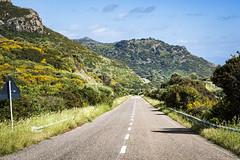 straight on (*magma*) Tags: sardegna sardinia ontheroad straight road strada alghero bosa