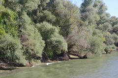 IMGP6780 (Alvier) Tags: rumänien donau donaudelta natur vögel fluss strom delta schiff schifffahrt donaufahrt