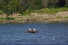 IMGP6802 (Alvier) Tags: rumänien donau donaudelta natur vögel fluss strom delta schiff schifffahrt donaufahrt
