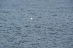 IMGP6803 (Alvier) Tags: rumänien donau donaudelta natur vögel fluss strom delta schiff schifffahrt donaufahrt