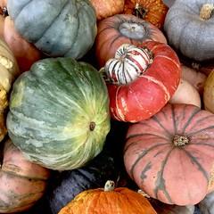 Colors of Autumn (Sandra Mahle) Tags: autumn fall colorsofautumn september ngysa nature naturephotography gourds colors