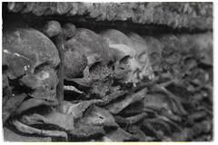 Memento Mori (michael_hamburg69) Tags: hamburg germany deutschland stpauli stjosephkirche church kirche barock katholisch 1718–1723 sakralbau grosefreiheit grossefreiheit43 skull totenschädel totenkopf schädel ossarium