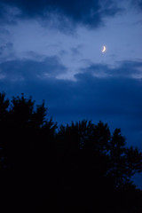 Moon Over Trees (Josh152) Tags: trees blue bluehour nikon d800 nature moon night nikkor105mmf25ais nikond800 clouds