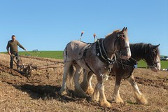 The Ploughing Match (Henry Hemming) Tags: ploughingmatch mayfield horsedrawn horses horse plough field autumn