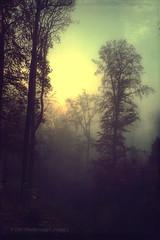 autumn dawn (Dyrk.Wyst) Tags: deutschland herbst fall iphone5s mist morning nature november outdoor sunrise trees dawn silhouettes textured conceptual season forest mood wuppertal nordrheinwestfalen